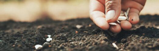 Siembra tu pan en las aguas: semillas